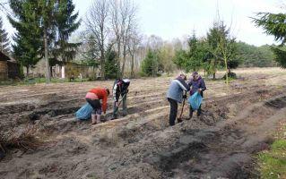 Sadzenie lasu na działce w Famułkach Królewskich