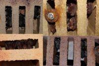 Collage 4 cegieł dziurawek z hibernującymi nietoperzami nocek rudy, nocek Natterera, gacek brunatny, mopek